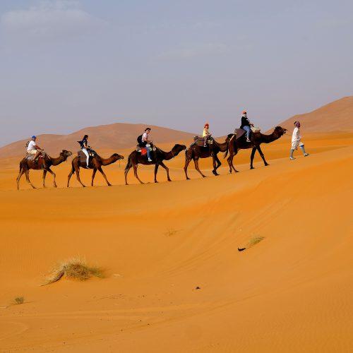 Dunes et Oasis du Draa