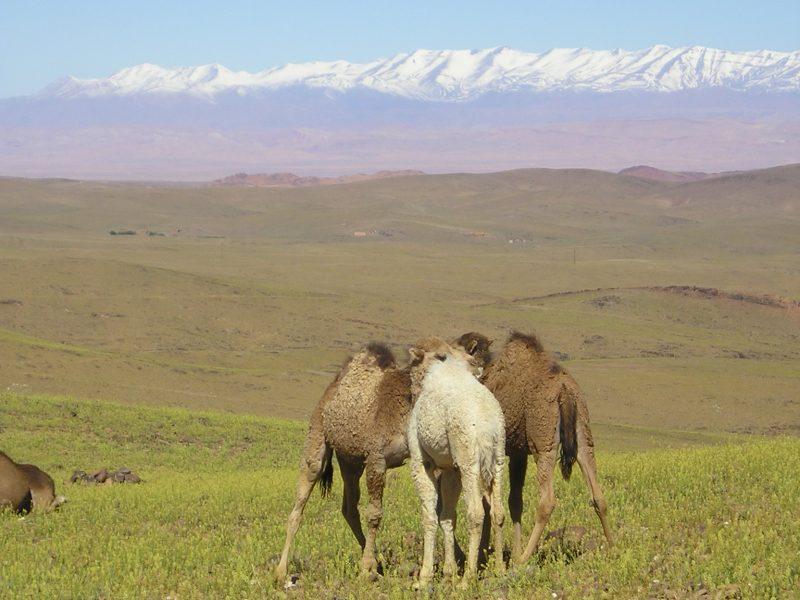 cheval dans le Saghro