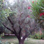 Le Maroc vert….ou l'importance capitale de l'eau!